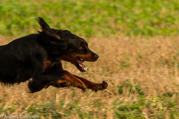 Poc i vild fart på fältet
